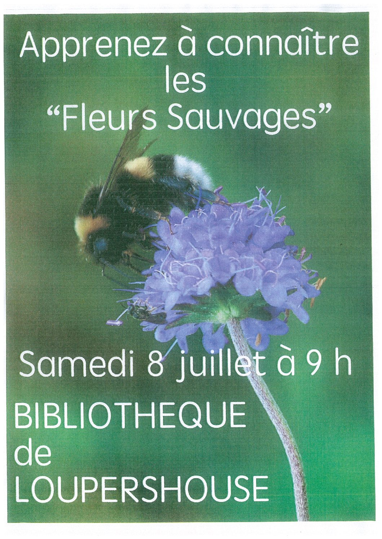 """Apprenez à connaître les """"fleurs sauvages"""""""